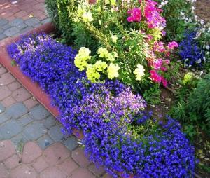 Фото сортов многолетних цветов для дачи