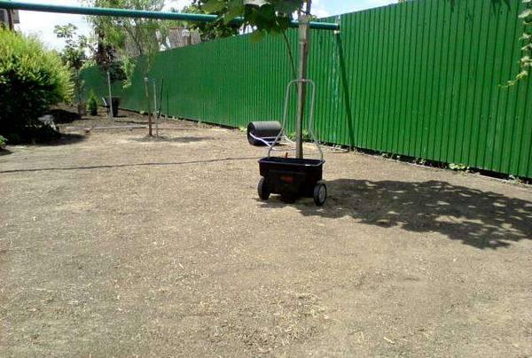 Посадка газона на даче  искусство создания зеленого ковра